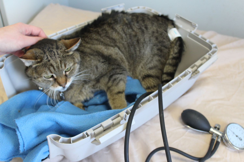 Katze in der Behandlung